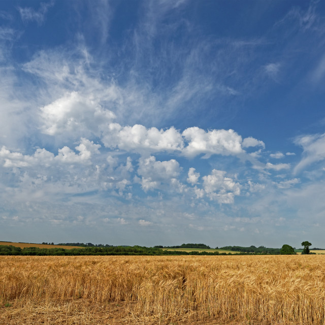 """Lincolnshire Wolds Farmland,UK"" stock image"