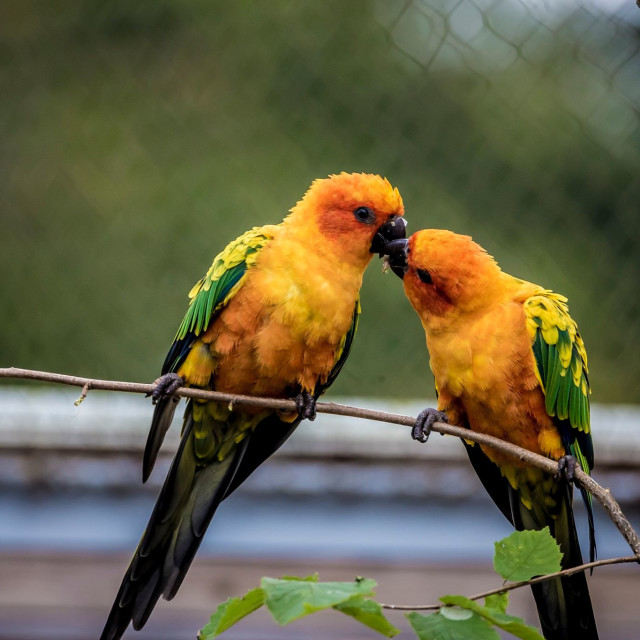 """(IN LOVE) Birds"" stock image"