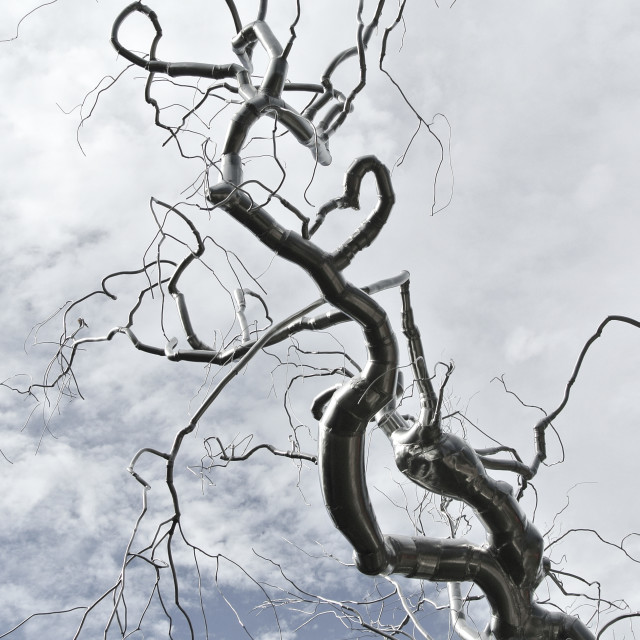 """Twisted Tree in the sky"" stock image"