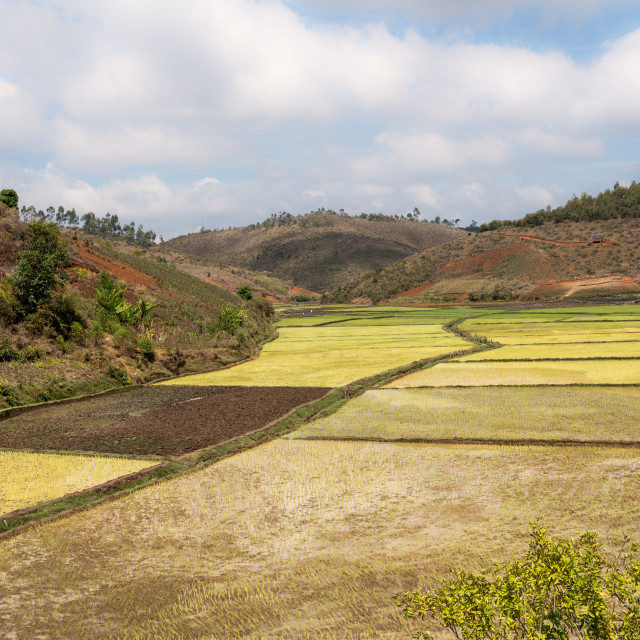 """Rice fields and deforestation of rainforest in Madagascar."" stock image"