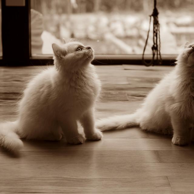 """""""Cat Sepia"""" stock image"""