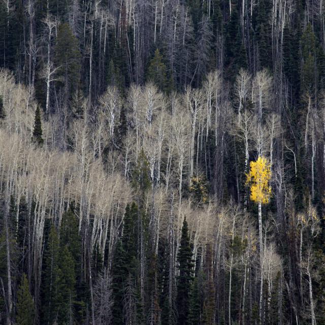 """""""Cedar Canyon Autumn"""" stock image"""