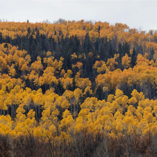 """""""Utah Fall Colors"""" stock image"""