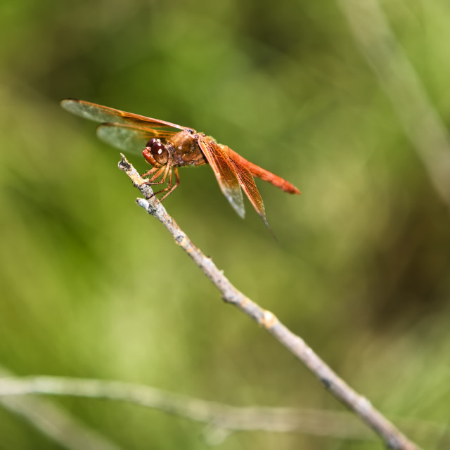 """""""Dragonfly"""" stock image"""