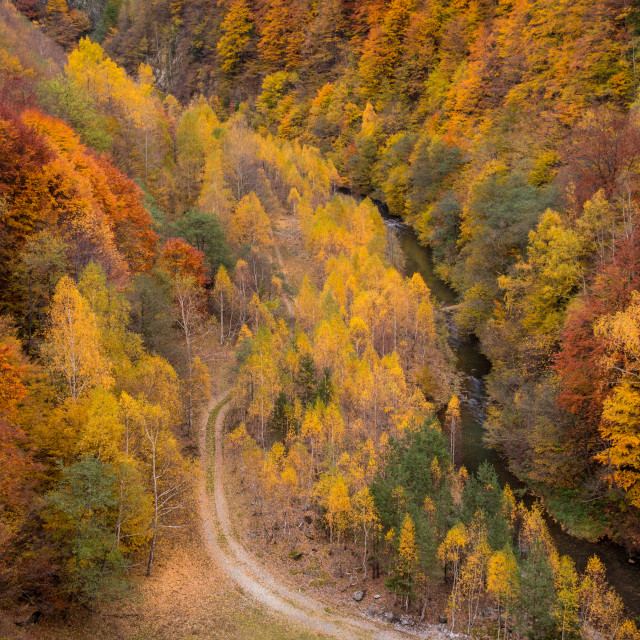 """""""Fall Color"""" stock image"""