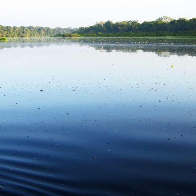 """""""Ripples on a lake"""" stock image"""