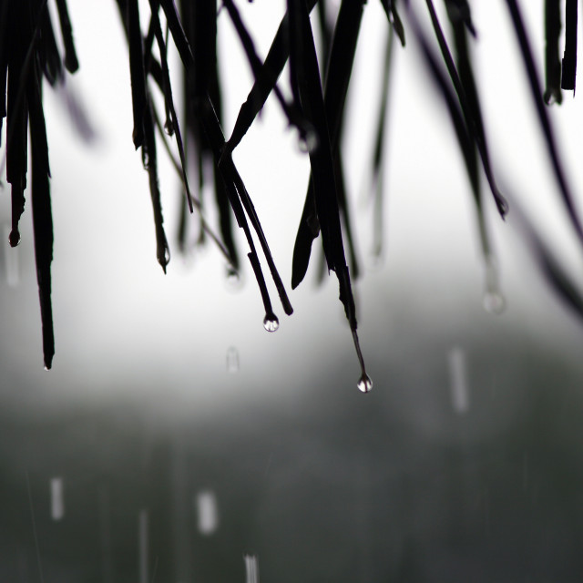 """""""Raindrops on roof"""" stock image"""