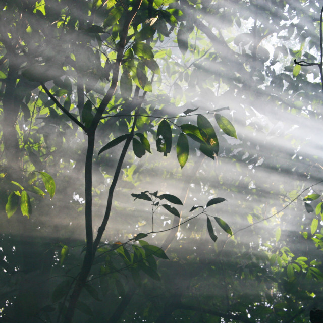 """Sunlight in the rainforest canopy"" stock image"