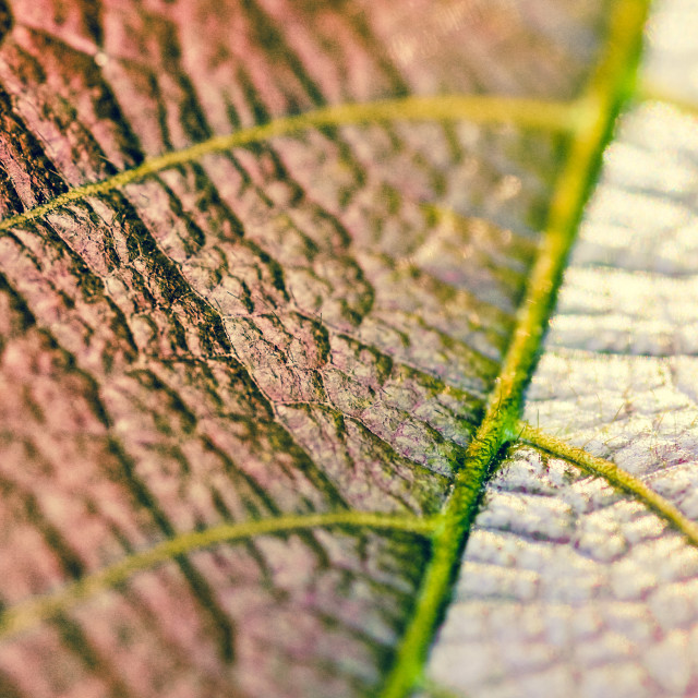 """Macro leaf"" stock image"