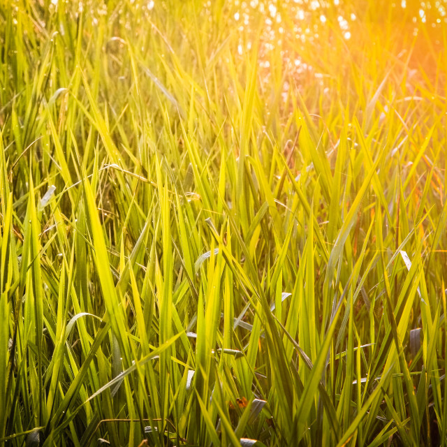 """Sunlight in the grass"" stock image"