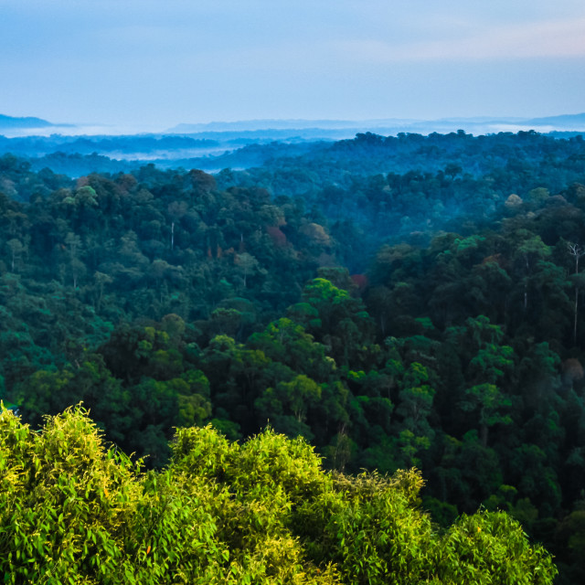 """The view out over the rainforest canopy"" stock image"