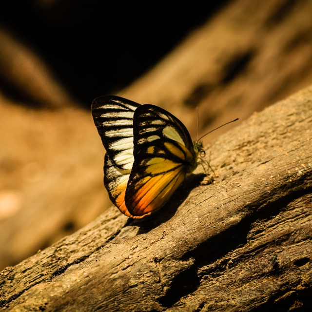 """Rainforest butterfly"" stock image"