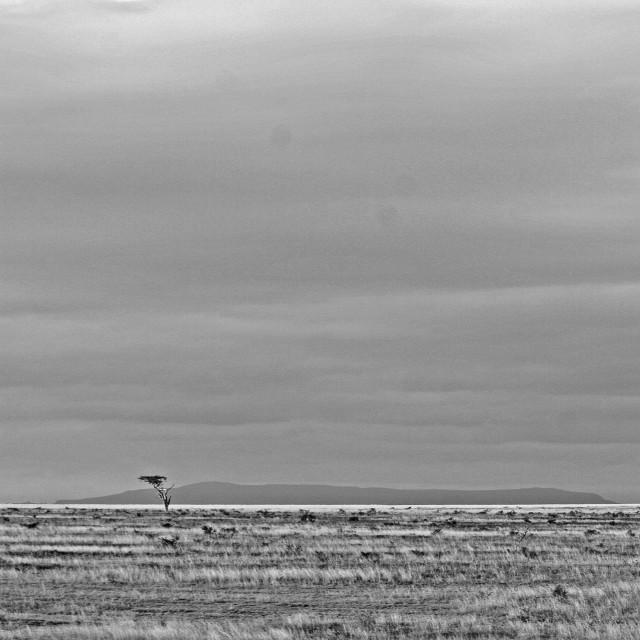 """African savannah landscape"" stock image"