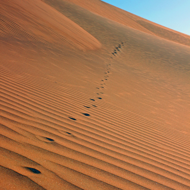 """Desert fox prints"" stock image"