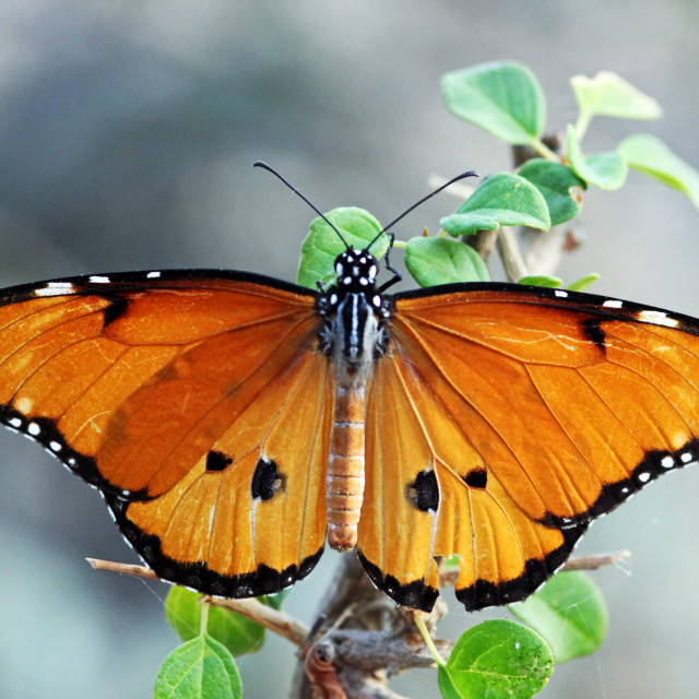 """Beautiful butterfly"" stock image"