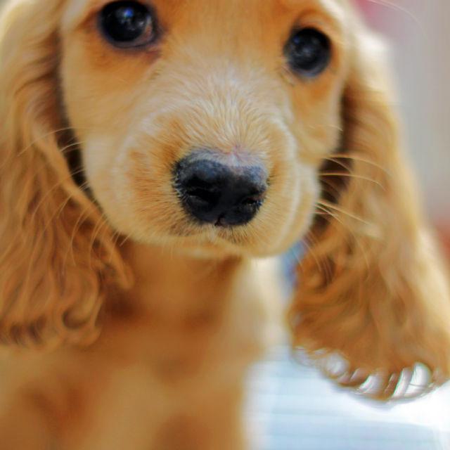 """Puppy, Armenia"" stock image"