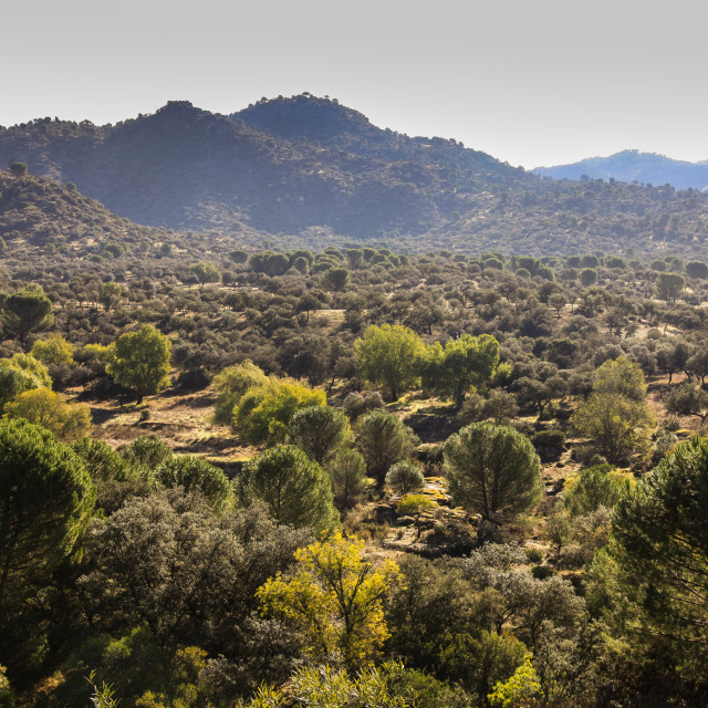 """Andalusia landscape"" stock image"