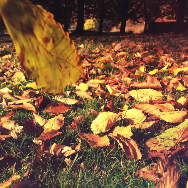 """Falling leaves"" stock image"