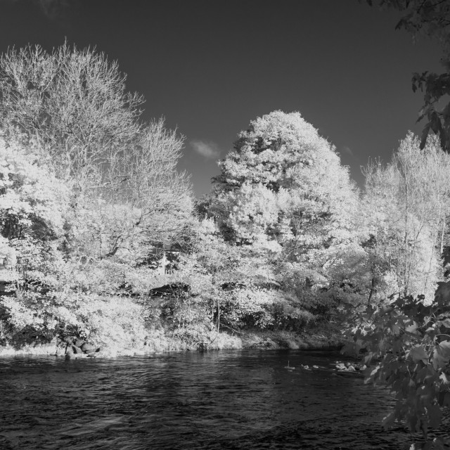 """""""River and trees"""" stock image"""
