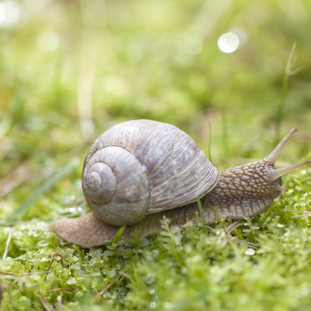 """Snail in the forest"" stock image"