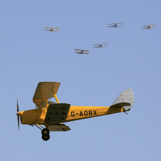 """Tiger Moths"" stock image"