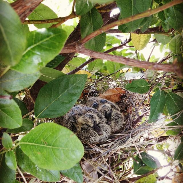 """Bird birth"" stock image"