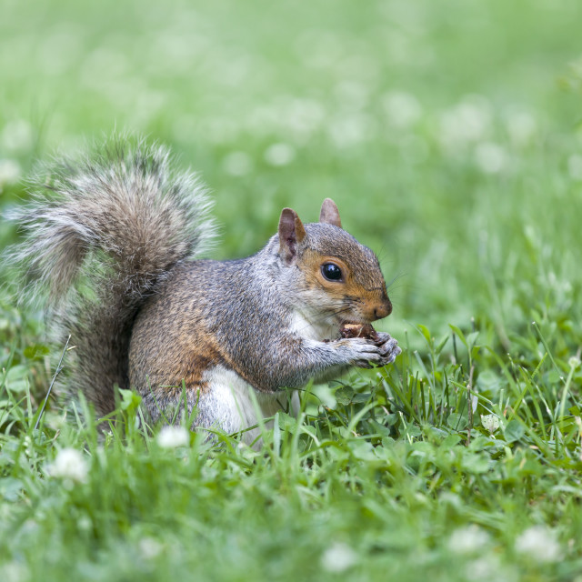 """""""Squirrel in the park"""" stock image"""