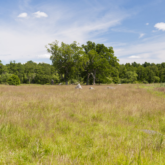 """""""Landscape in Sweden"""" stock image"""