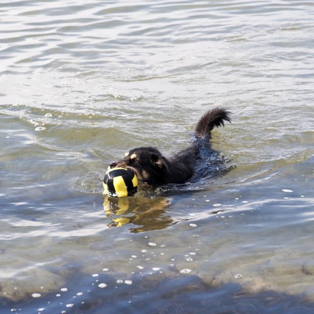 """Playing dog on the Baltic Sea beach"" stock image"
