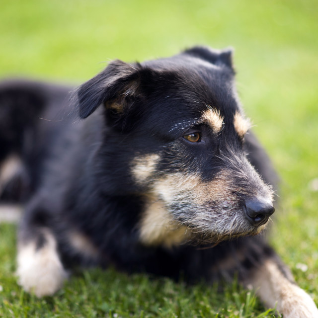 """""""Dog on the Grass"""" stock image"""