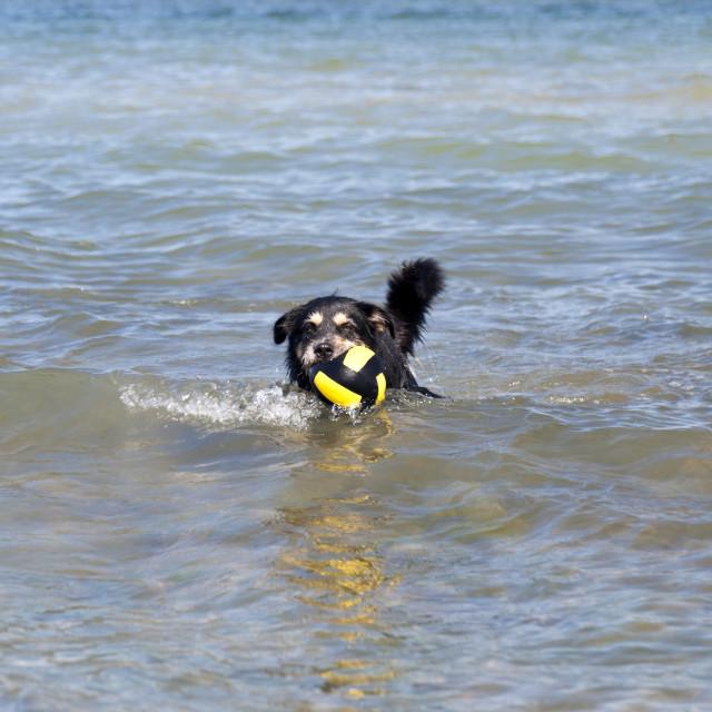 """""""Bathing Dog"""" stock image"""