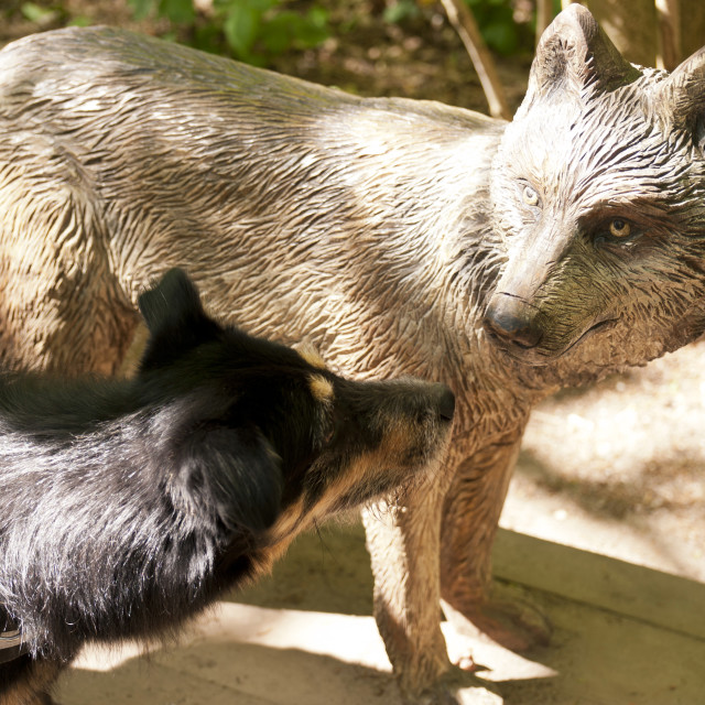 """""""Dog nosing on a Wolf Sculpture"""" stock image"""