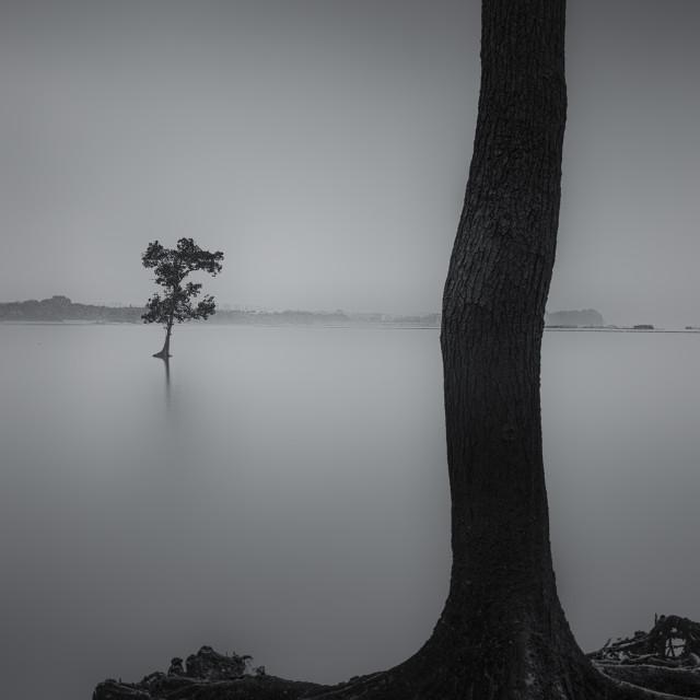 """Afar Tree - Study 1"" stock image"
