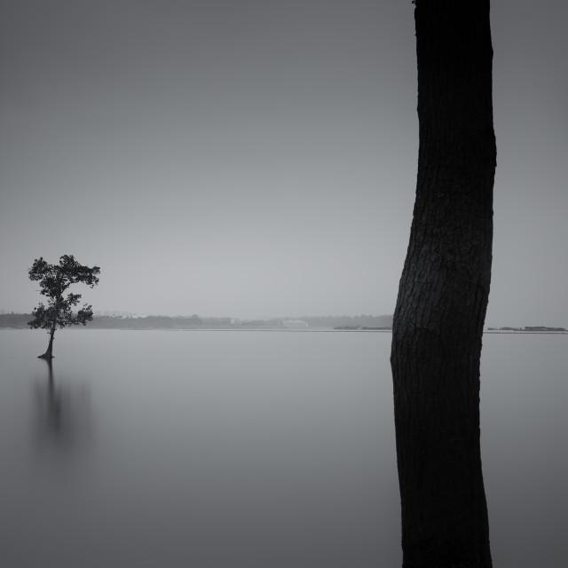 """Afar Tree - Study 2"" stock image"