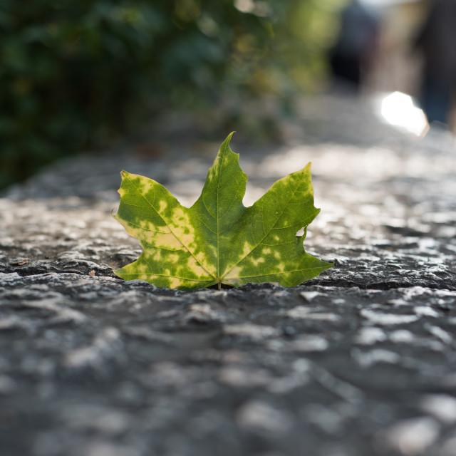 """leaf in concrete"" stock image"