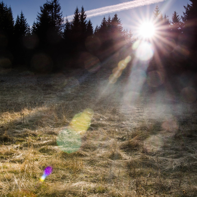 """""""sunshine over the filed"""" stock image"""