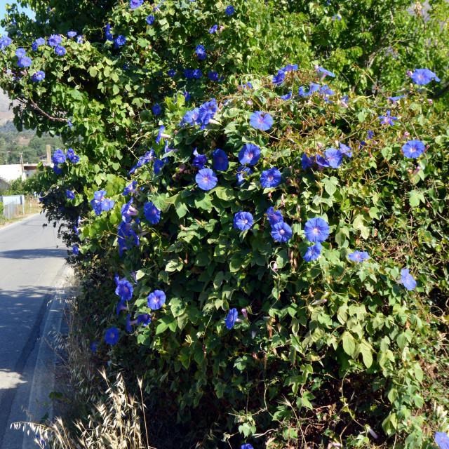 """Beautiful flowers of garden in Crèta."" stock image"