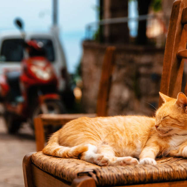 """Big red ginger cat reposes outdoors on a chair"" stock image"