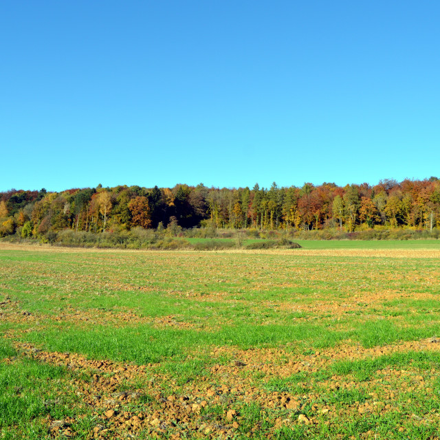 """plow fields with autumn trees"" stock image"