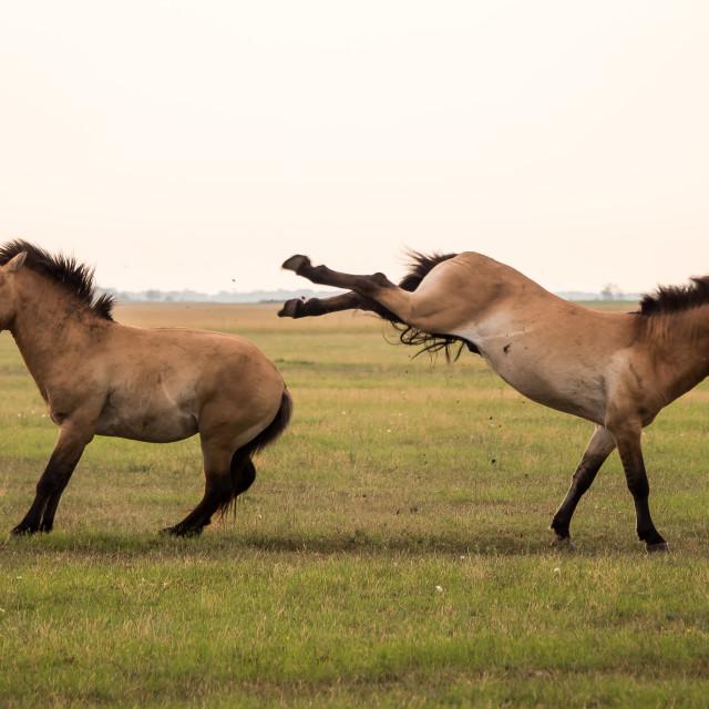 """""""Wild horses"""" stock image"""