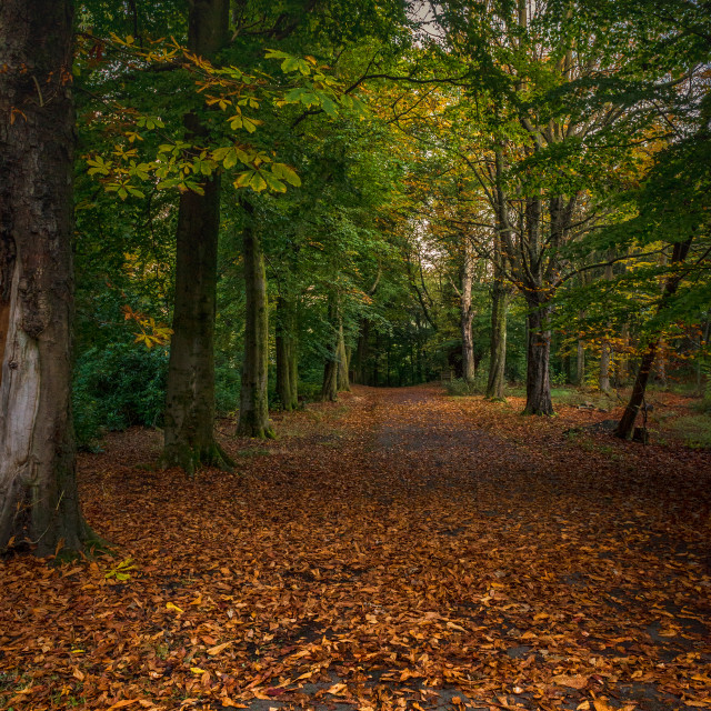 """Autumn in Pollok Park"" stock image"
