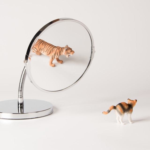 """""""self-confidence front of the mirror - cat"""" stock image"""