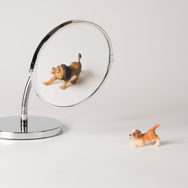 """self-confidence front of the mirror - puppy"" stock image"