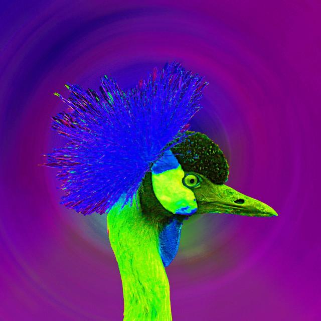 """Crazy Bird"" stock image"