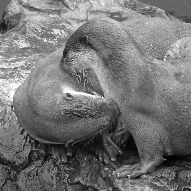 """""""Love Otters"""" stock image"""
