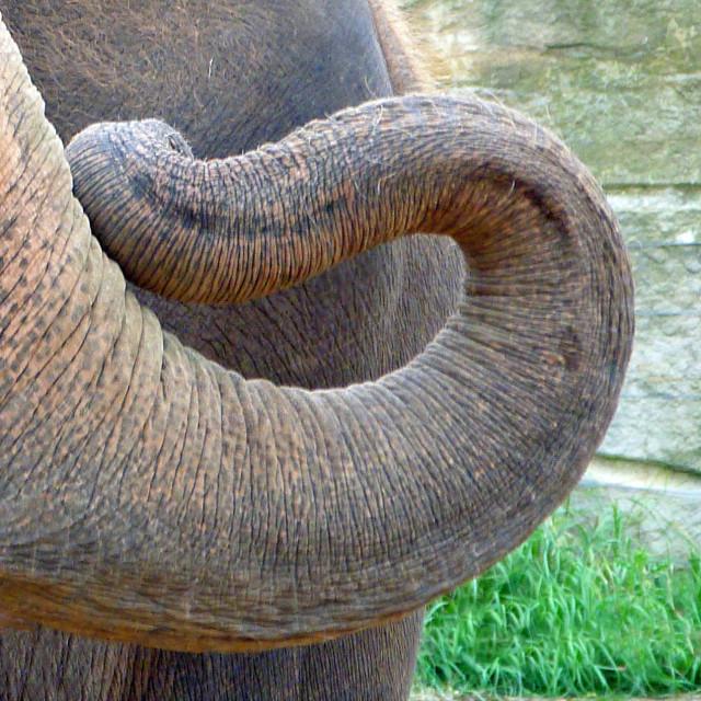 """""""Elephant Trunk"""" stock image"""