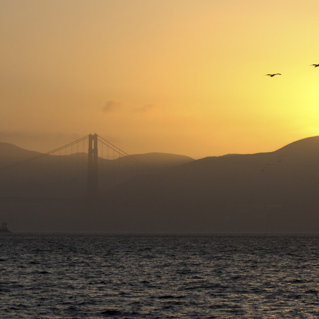 """Pelicans at sunset by the Golden Gate"" stock image"