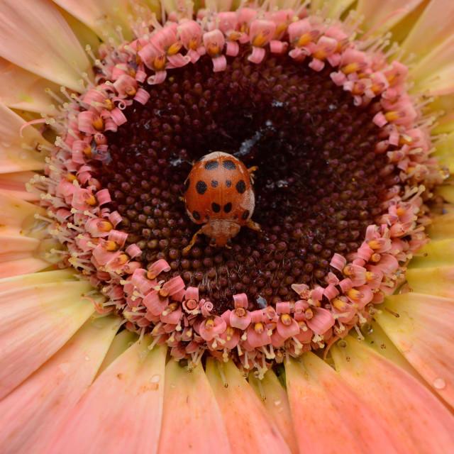 """""""Thumbelina the Lady Bug"""" stock image"""
