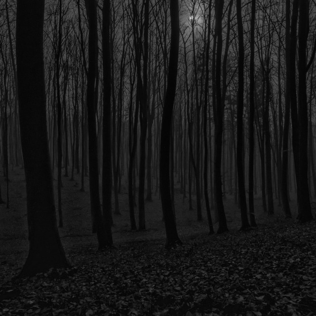 """Moonlit Forest"" stock image"