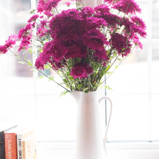 """Chrysanthemum2"" stock image"